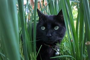 Un chat noir avec une clochette autour du cou