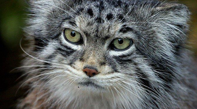 Les félins: la grande famille du chat