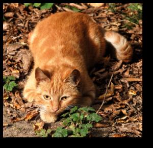 Notre chatte Marie est à l'affût à la chasse